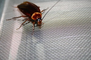 Do cockroaches survive in microwaves? -and more!