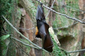 Bats are very helpful- this is how