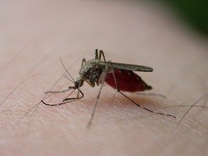 How do mosquitoes find me in the dark?