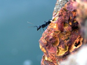 Pest control: How to get rid of ants (a product guide)