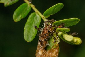 How does teamwork help ants survive?