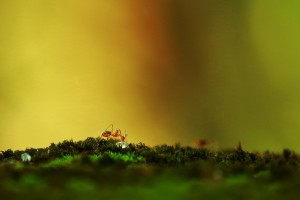 Why do ants come in the house when it rains?